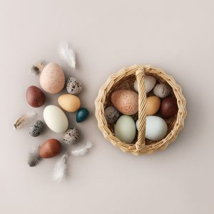 Moon Picnic Dozen Birds Eggs